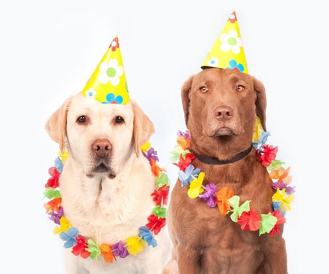 Dogs, Carnival, Humor, Pet, Ernst, Labrador