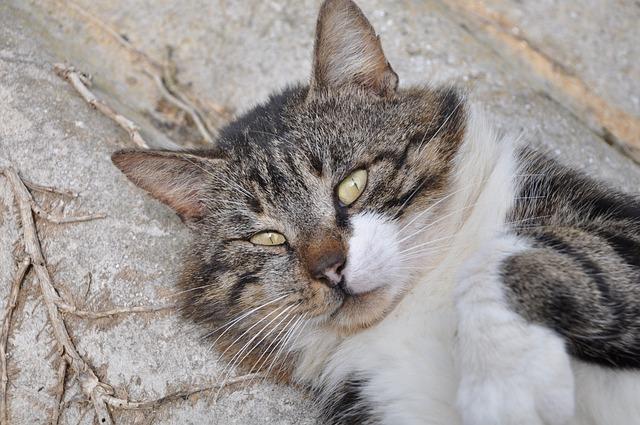 Cat, Cat's Eyes, Eyes, Pet, Feline, Domestic Animal
