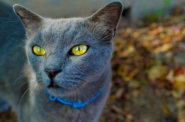 Cute, Animal, Nature, Portrait, Eye, Cat, Looking, Pet