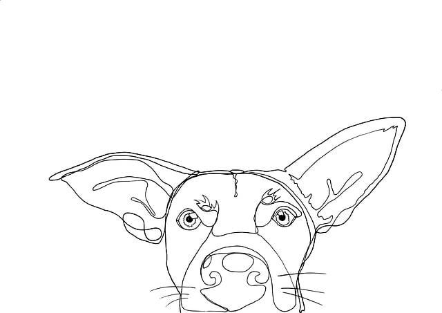 Dog, Pet, Face, Funny, Cute, Eyes