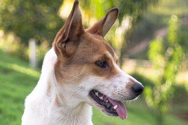 Dog, Pet, Animal, Canine, Mutt, Friend, Animals