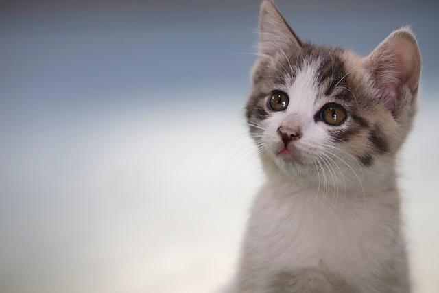 Cat, Kitten, Street Cat, Pets, Gilnyangyi, Animal, Pet