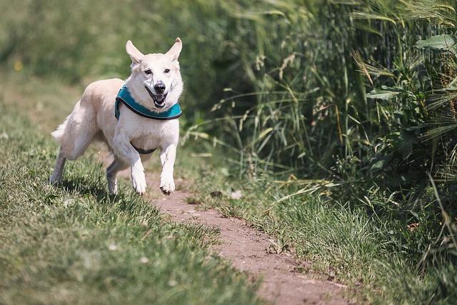 Dog, Race, Fun, Animal, Pet, Play, Run, Hunt, Great