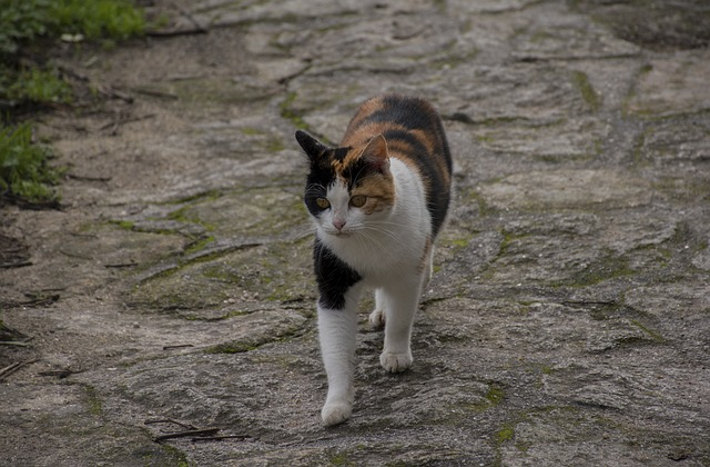 Mammals, Animal, Cute, Cat, Pet, Nature, No Person, Eye