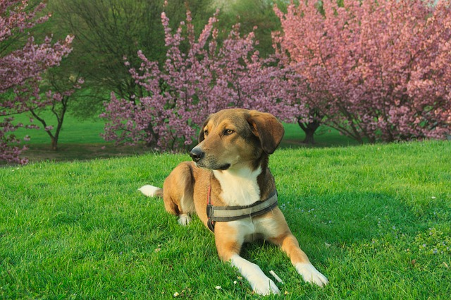 Dog, Concerns, Hybrid, Pet, Park, Meadow