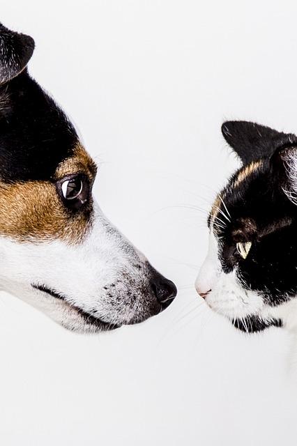 Cats, Dog, Animal, Dogs, Animals, Pet, Nature, Doggy