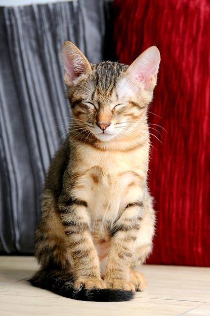 Pet, Cat, Sat, Doze