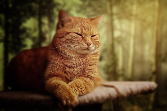 Cat, Dream, Soft, Animal, Cute, Pet, Sleeping, Kitty