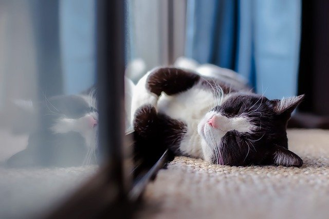 Cat, Pet, Animal, Sleeping, Resting, Heat, Sunshine