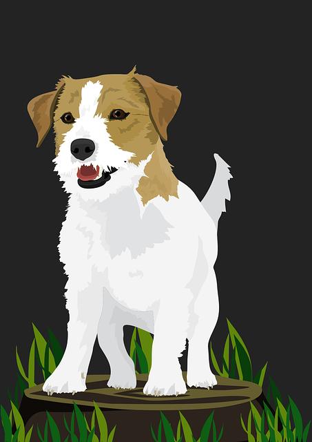 Dog, Terrier, Small Dog, Animal, Pet