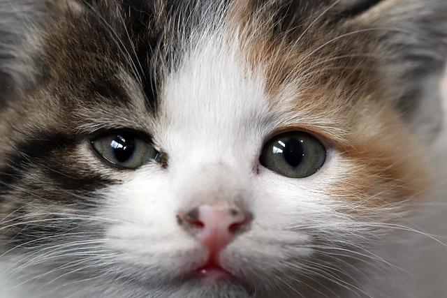 Cat, Street Cat, Gilnyangyi, Kitten, Animal, Cute, Pet