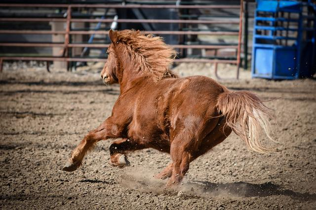 Pony, Horse, Running, Animal, Farm, Pet, Nature, Wild