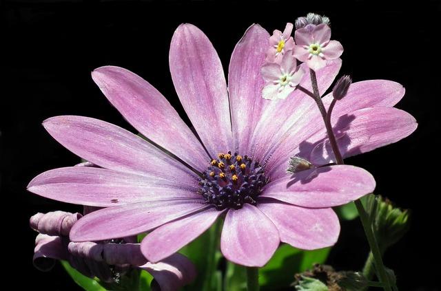 Flower, Nature, Plant, Petal, Garden, Summer, Blooming