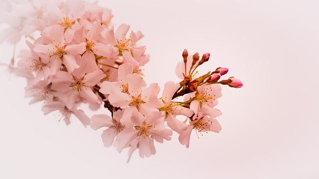Plant, Nature, Season, Flowering, Petal, Branch, Nice