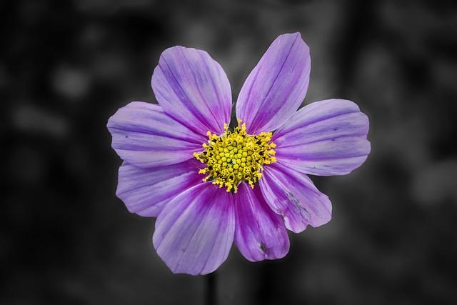 Flower, Nature, Flora, Petal, Garden, Blooming, Closeup