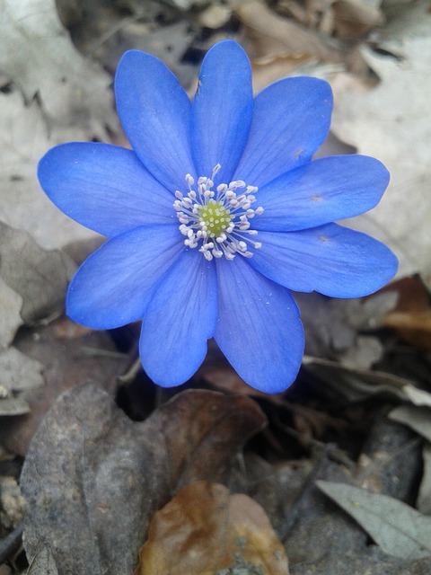 Nature, Flower, Flora, Season, Petal