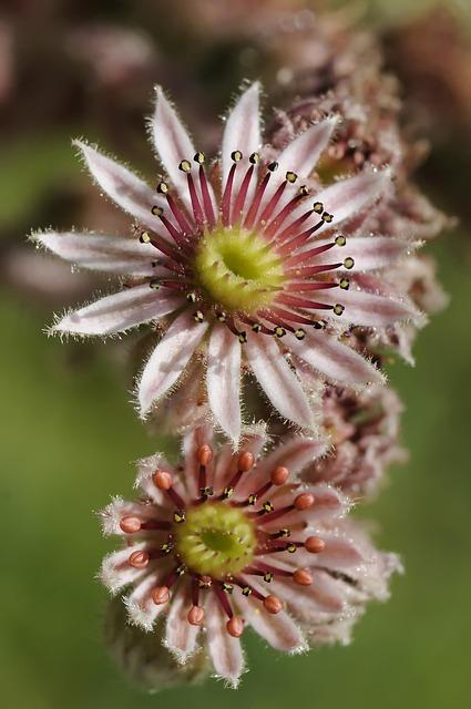 Nature, Flower, Close Up, Garden, Petal, Floral