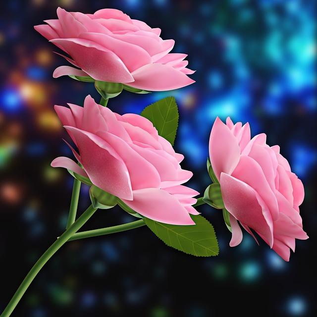 Nature, Flower, Petal, Leaf, Pink Flowers, Pink, Flash
