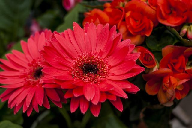Nice Flower, Plant, Nature, Flower, Petal