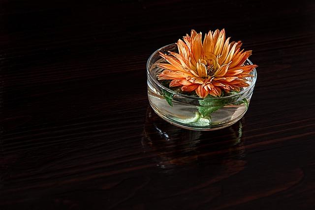 Dahlia, Flower, Petal, Blossom, Bloom, Still Life