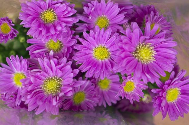 Heather, Pink Purple, Petal