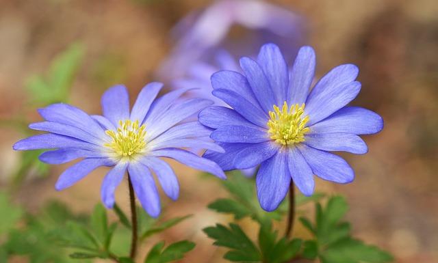 Nature, Flower, Plant, Summer, Petal, Hepatica, Garden