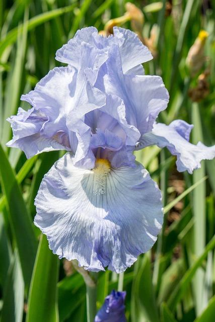 Flora, Nature, Flower, Leaf, Petal