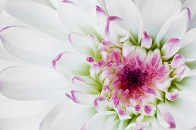 Macro, Flower, White, White Flower, Petal