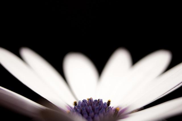 Flower, Petal, Stem, Flora, Floral, Nature, Outdoor