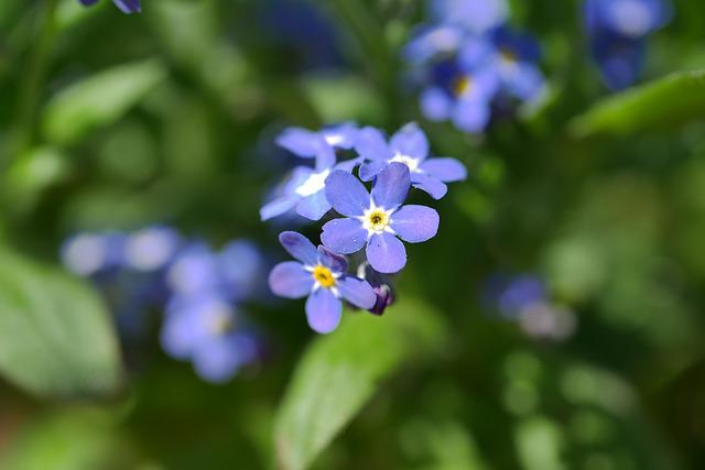 Nature, Plant, Flower, Leaf, Garden, Petal