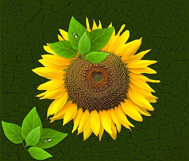 Plant, Nature, Flower, Petal, Sunflower, Flowers