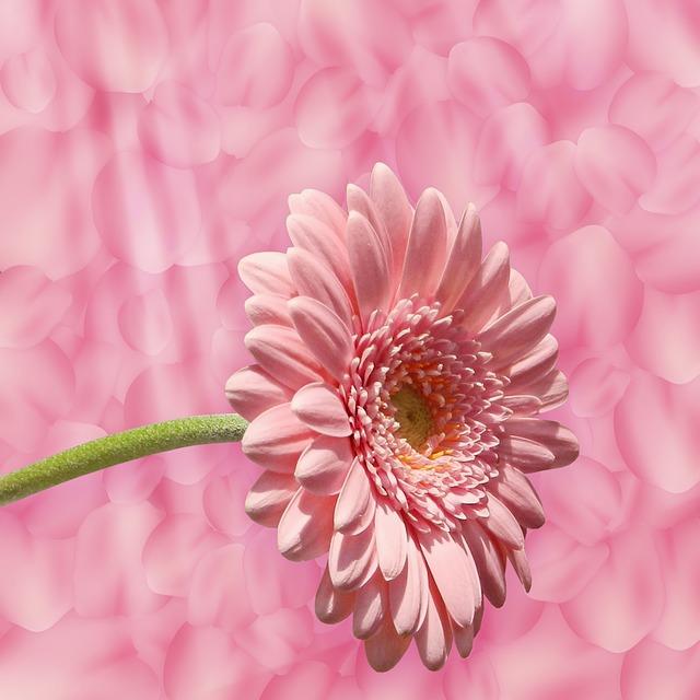 Background Texture, Flower, Petals, Pink, Design