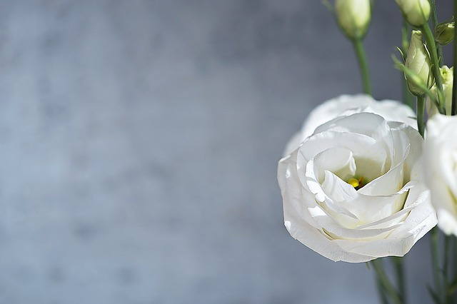 Lisianthus, Flower, Blossom, Bloom, White, Petals