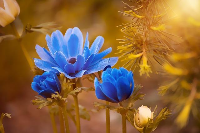 Anemone, Blue, Flower, Blossom, Bloom, Petals, Summer