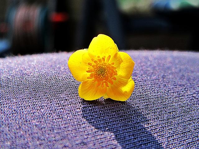 Buttercup, Macro, Yellow Flower, Petals, Nature, Bloom