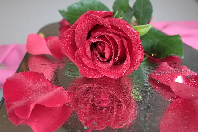 Rose, Flower, Red Rose, Beautiful Flower, Drops, Petals