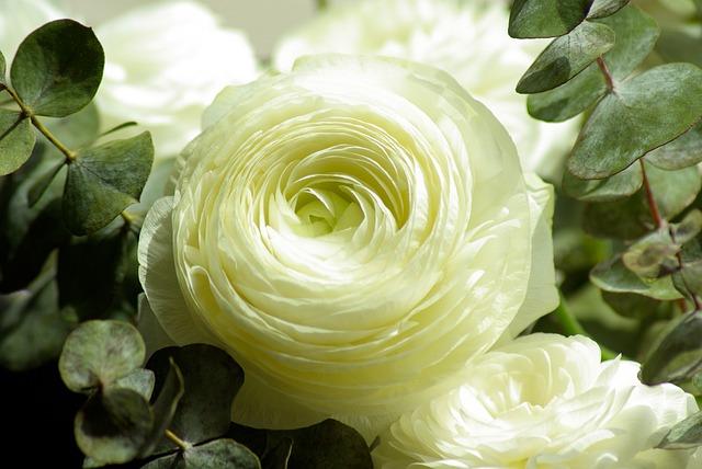 Flowers, Buttercups, Flowering, Petals