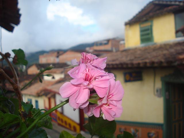 Guatape, Antioquia, Colombia, Nature, Petals