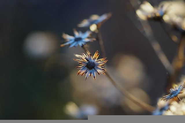 Flowers, Petals, Dried Flowers, Star, Plant