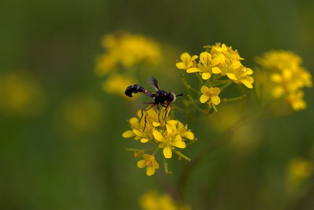 Wasp, Flower, Yellow, Petals, Nature, Wild