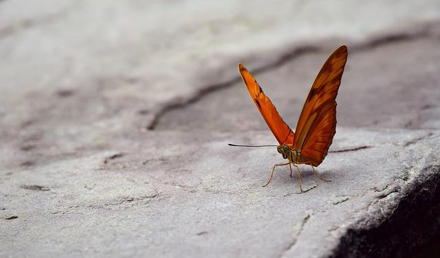 Butterfly, Wing, Orange, Small, Tender, Petite, Stone