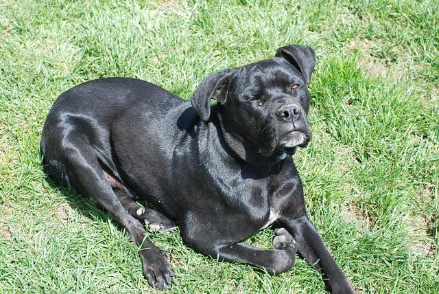 Dog, Serbia, Pets, Animal, Outdoors