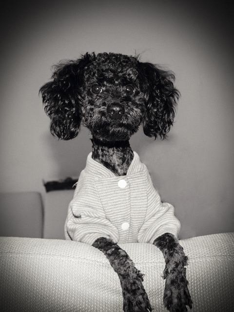 Diudiu, Pets, Dog, Son, Love, Photography, Jane 13