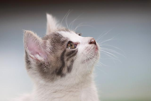 Cat, Kitten, Street Cat, Pets, Gilnyangyi, Pet, Animal