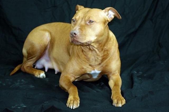 Dog, Portrait, Animal, Mama, Cute, Pets, Family, Mammal