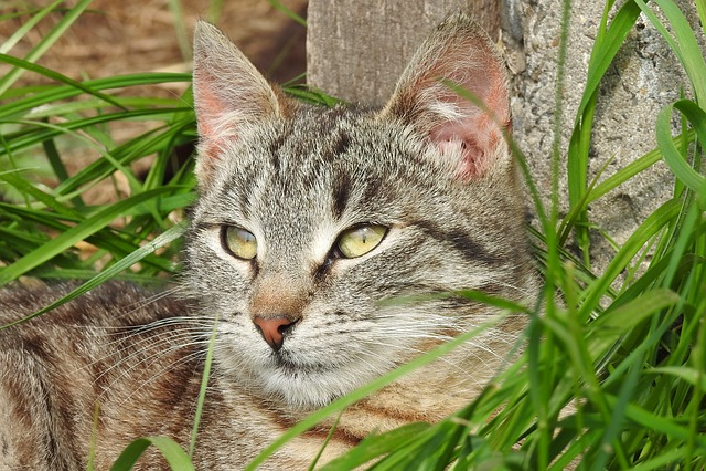 Animals, Charming, Nature, Mammals, Cat, Pets, Kitten