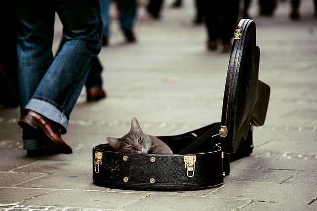 Kitty, Animal, Pets, Cat, Guitar Case, Street Musicians