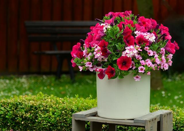 Petunia, Flowers, Balkonblumen, Flowerpot, Terrace