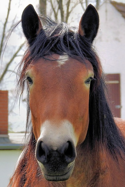 Horse, Horse Head, Pferdeportrait