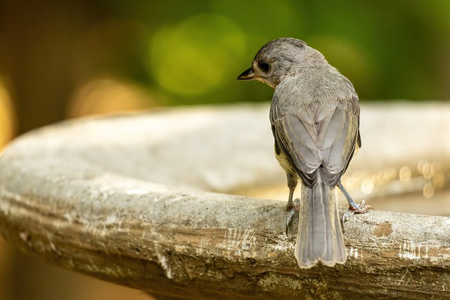 Phoebe, Eastern Phoebe, Bird, Nature, Wildlife